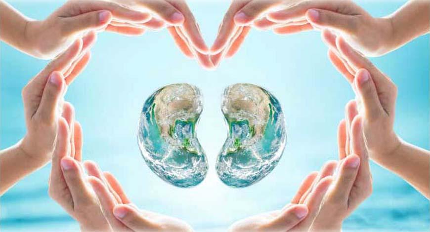 12 марта - Всемирный день почки.