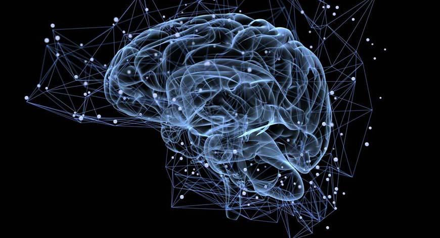 22 августа - Всемирный день мозга