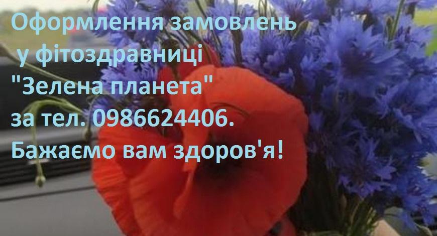 Волошки- блакитні корони квітів. Небесно-синій медонос вважається бур'яном. Але ж який гарний та цілющий цей бур'ян! Разом з Наталею Петрівною збираємо  ці квіти для вас!..