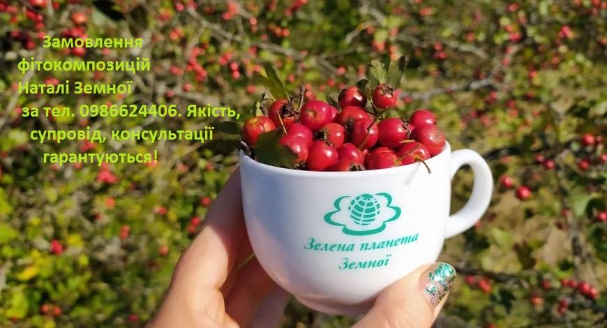 Осенняя кладовая полезных трав обогатилась свежим урожаем ягод боярышника.