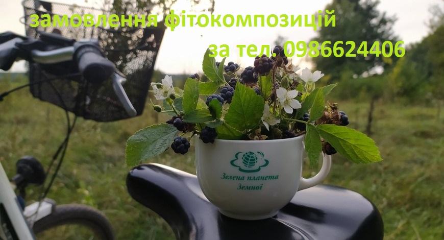 """Наталья Петровна в газете """"Зеленая планета"""" неоднократно описывала целебные свойства этой лесной ягоды. Ежевика - ягода, которую опытные травники любят и ценят."""